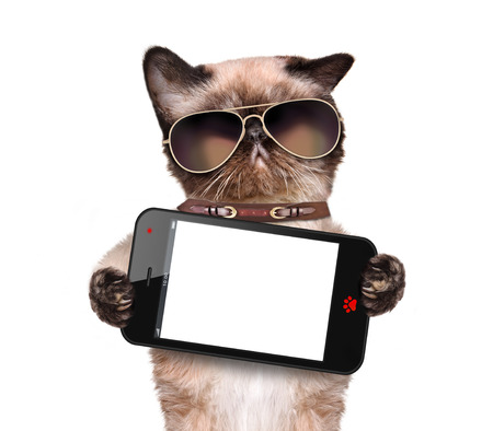 pet photography: Cat holding a blank smartphone. Isolated on white. Stock Photo