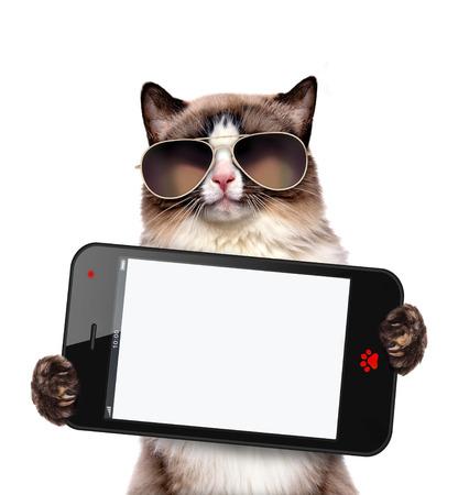 空白のスマート フォンを持った猫。