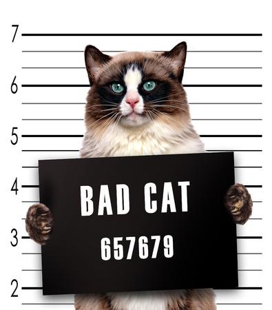 in jail: Gato malo.