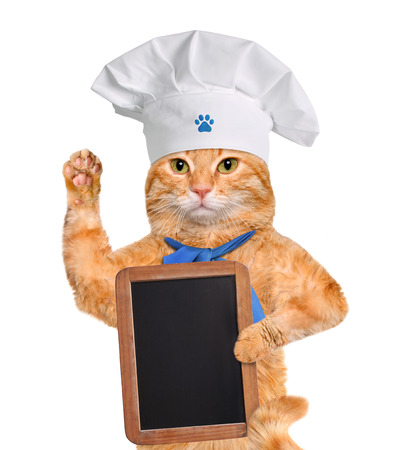 Cat chef. Isolated on white. photo