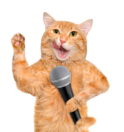 the showman: Cat with a microphone. Stock Photo
