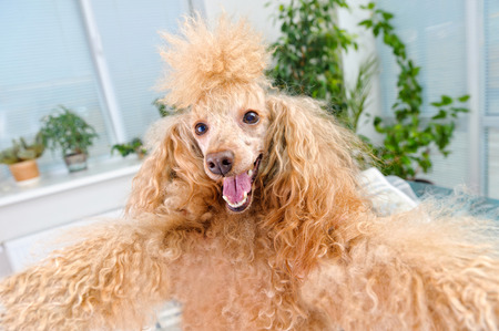 celula animal: perro tomar un selfie con un smartphone