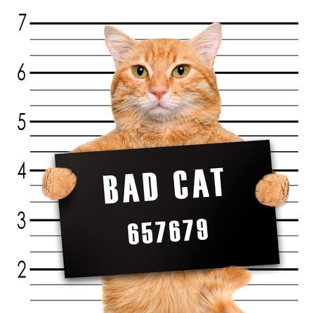 나쁜 고양이.