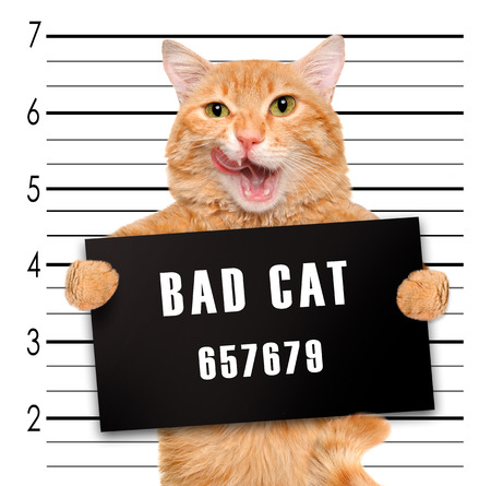 Bad cat.