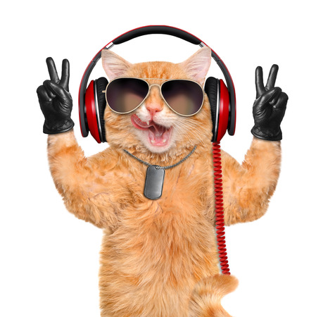 Cat headphones. Stock Photo