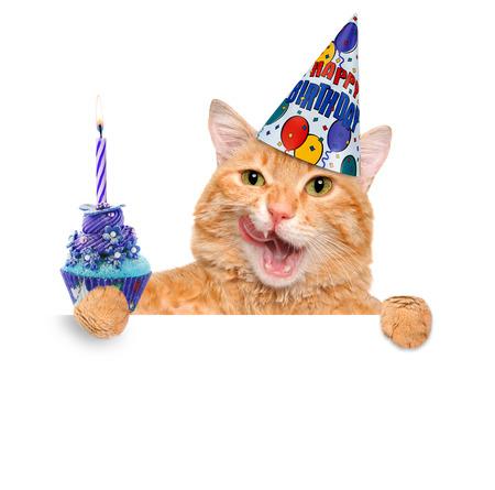 new year cat: Birthday cat. Stock Photo