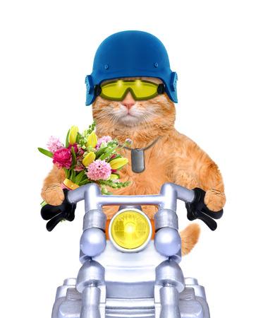 animal idiot: motorcycle cat