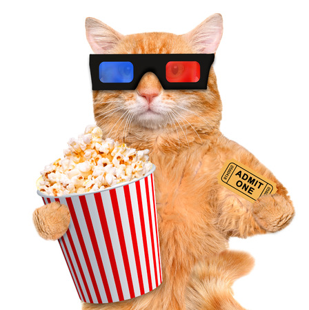 eating popcorn: cat watching a movie