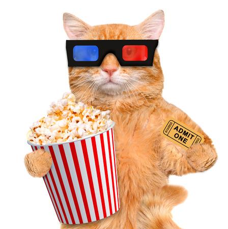 blockbuster: cat watching a movie