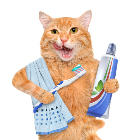 Brushing teeth cat. Isolated on white.