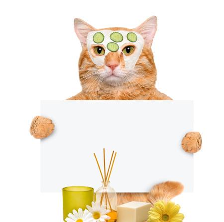 wash: Spa wash cat.