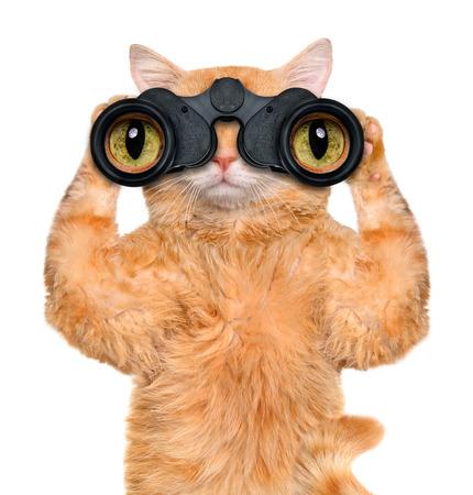 双眼鏡猫見て、注意して観察を検索 写真素材