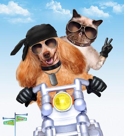 Couple moto à grande vitesse. Banque d'images - 40636524