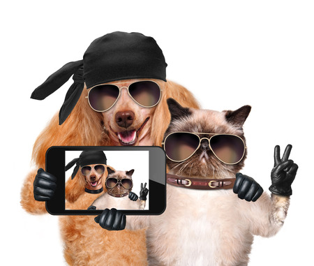 amicizia: cane con gatto prendendo un selfie insieme con uno smartphone Archivio Fotografico