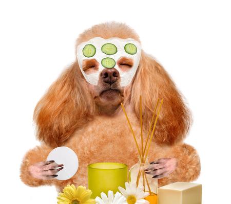 wash: spa wash dog Stock Photo