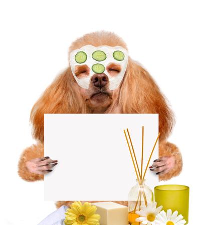 spa wash dog Standard-Bild