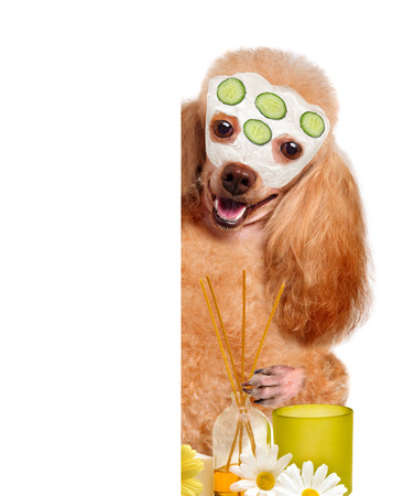 body grooming: spa wash dog Stock Photo