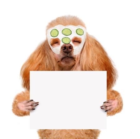 spa wash dog photo