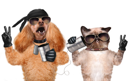 animal idiot: Cat with a dog on the phone with a can