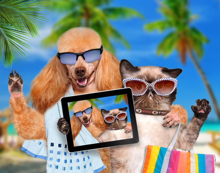 dog with cat taking a selfie together with a smartphone