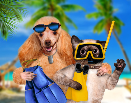 Dog with cat diver. Stockfoto