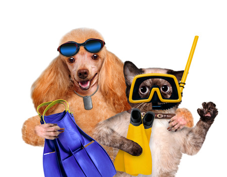 Dog with cat diver. Isolated on white. Stockfoto