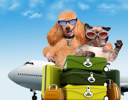 Dog and cat traveler. photo