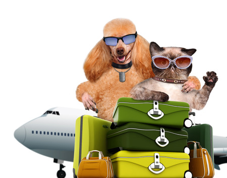 Dog and cat traveler. Isolated on white. Фото со стока