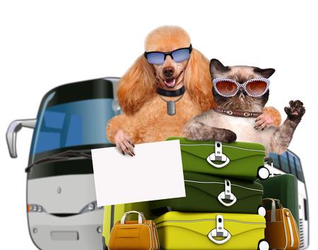 flyaway: Dog and cat traveler. Isolated on white. Stock Photo