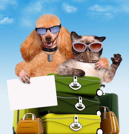 flyaway: Dog and cat traveler.