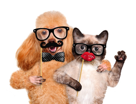 Hipster dog and cat. Isolated on white.