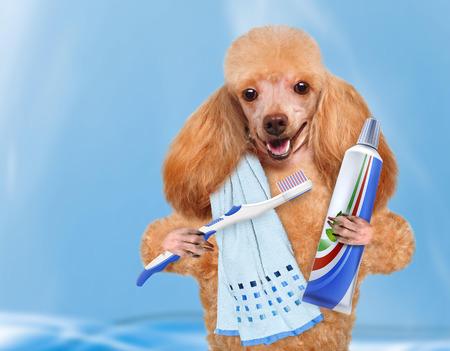 brushing teeth dog Stockfoto