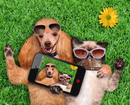 Cat and dog taking a selfie. 版權商用圖片