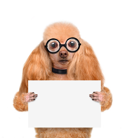 funny glasses: crazy silly dog with funny glasses behind blank placard