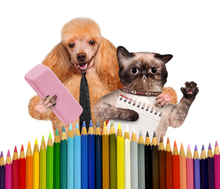 Dog and cat with school supplies Фото со стока