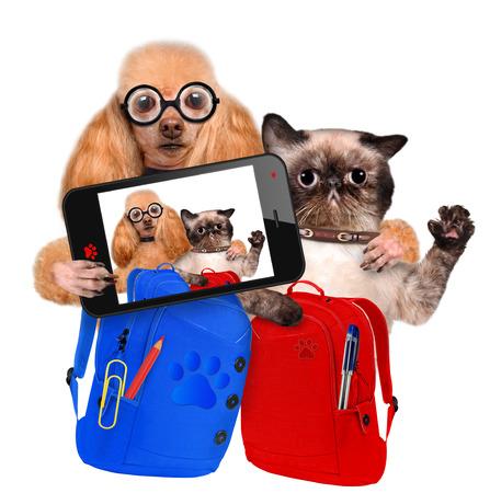 Selfportrait dog and cat. Back to School. Фото со стока