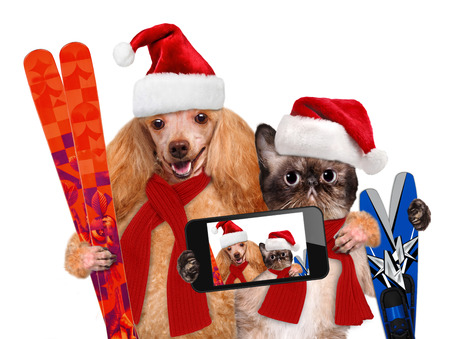 Cat and dog in red Christmas hats taking a selfie together with a smartphone Фото со стока