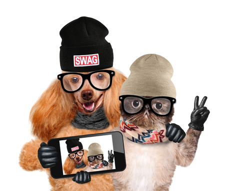 funny animal: dog with cat taking a selfie together with a smartphone