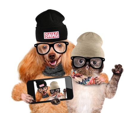 スマート フォンと一緒に selfie を取っての猫と犬