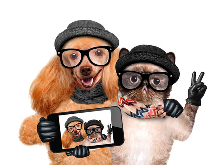 funny love: Dog with cat taking a selfie together with a smartphone. Stock Photo