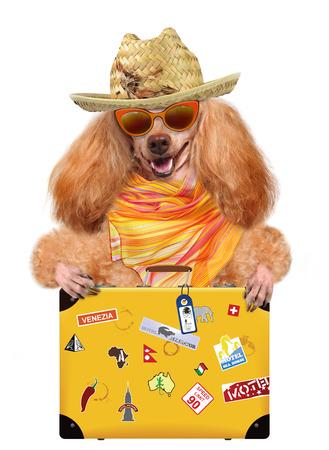 Dog on holidays with luggage photo
