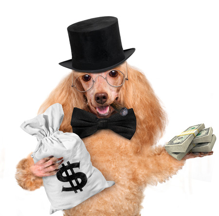 money dog holding