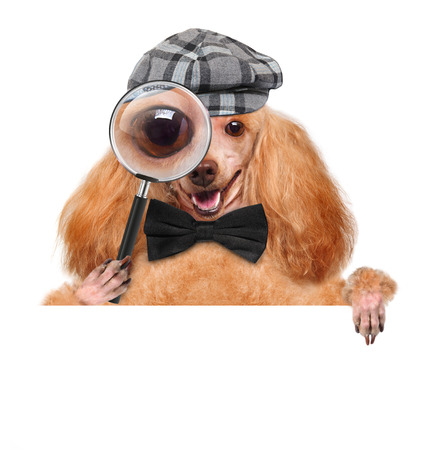 dog with magnifying glass and searching