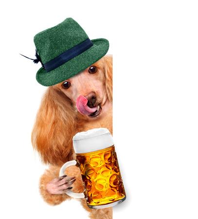 beerfest: dog with a beer mug