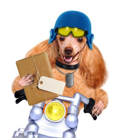 animal idiot: motorbike dog