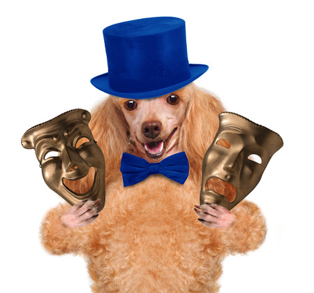 visard: dog with theatrical masks Stock Photo