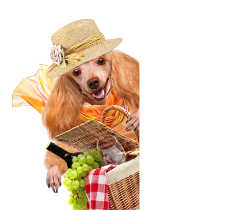 picknick: dog with Picnic basket