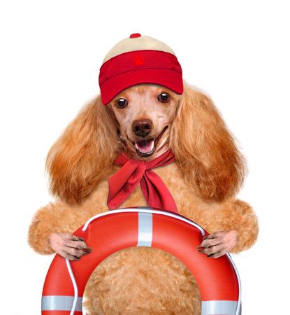 rescuer: dog rescuer Stock Photo