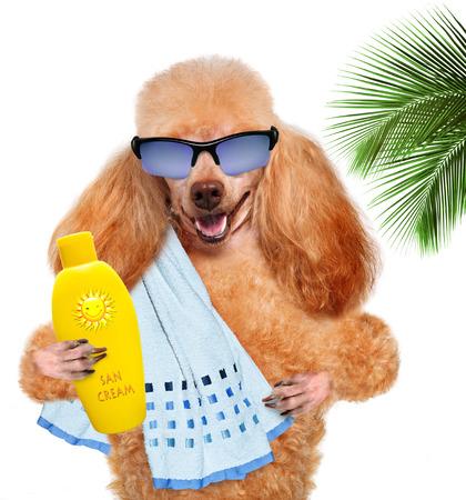 Dog with sunscreen. Фото со стока