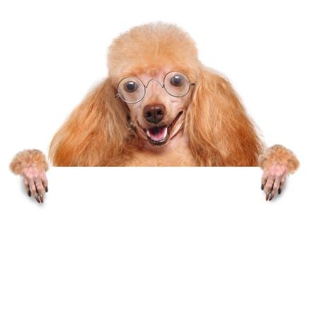 placeholder: placeholder banner dog